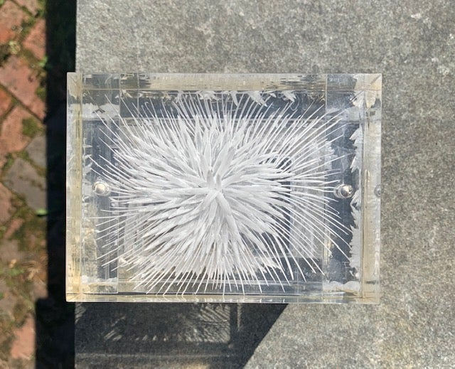 Image of Clear Nettles Lucite Box