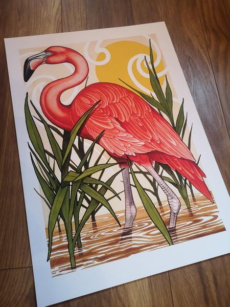 Image of A2 flamingo