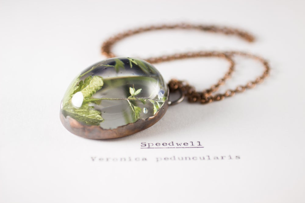 Image of Speedwell (Veronica peduncularis) - Copper Plated Necklace #1