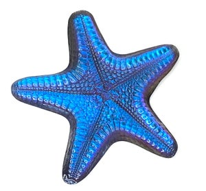 Starfish Cabochons~ 5 to choose from.