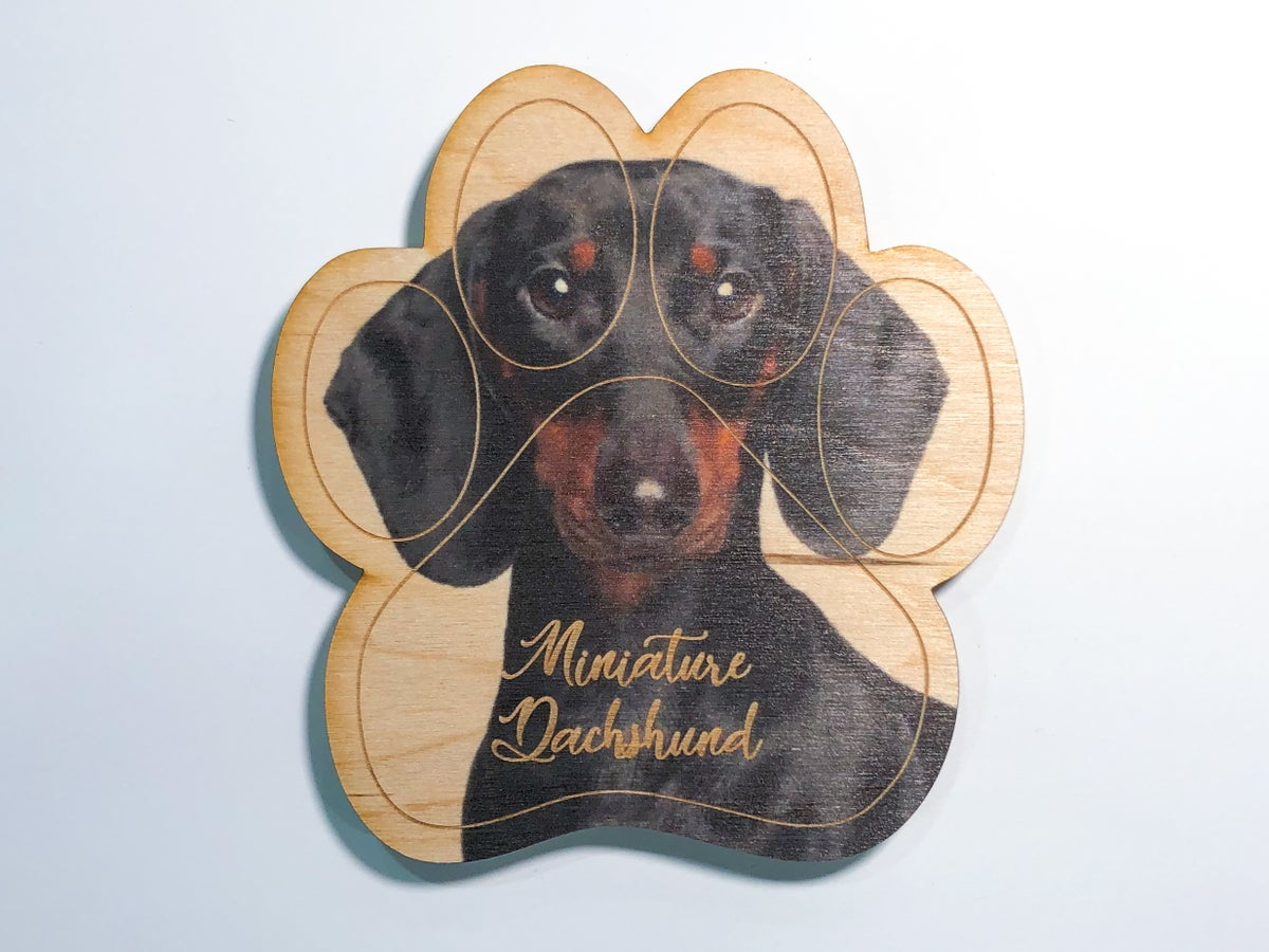 Image of Miniature Dachshund Magnet