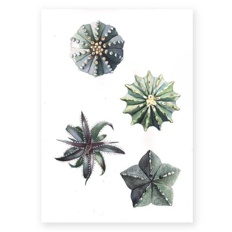 """Image of Original Painting - """"Cactus et succulentes"""" - 35x48 cm"""