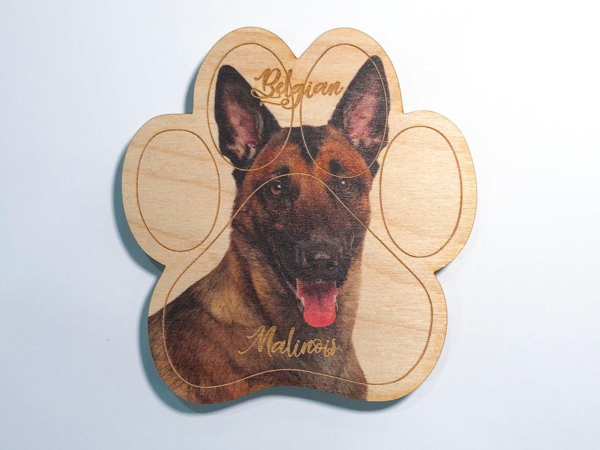 Image of Belgian Malinois Magnet
