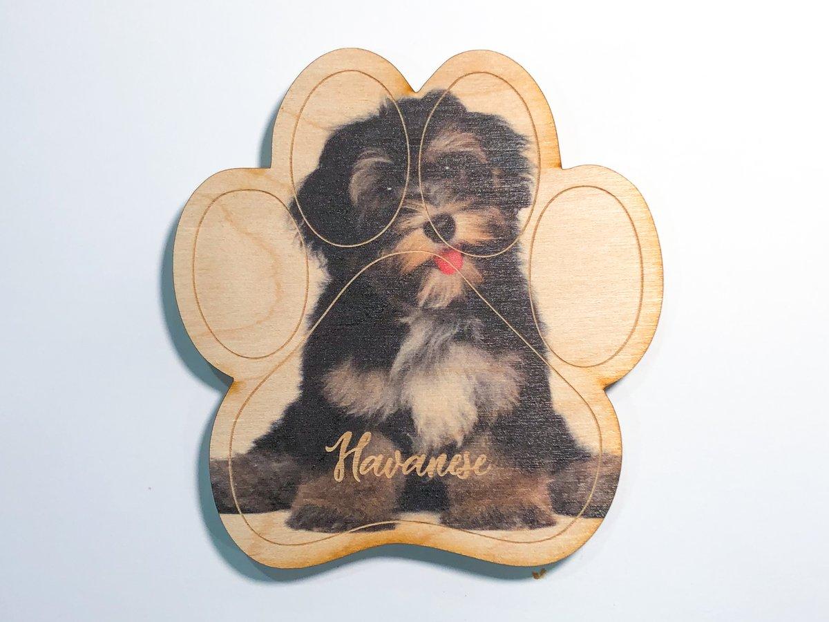 Image of Havanese Magnet