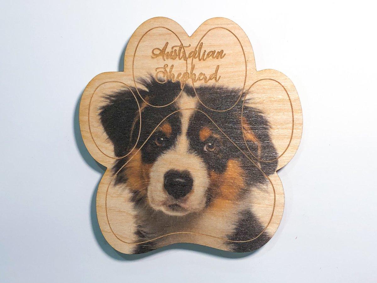 Image of Australian Shepherd Magnet