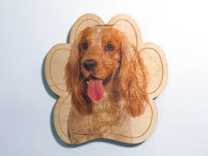 Image of Cocker Spaniel Magnet