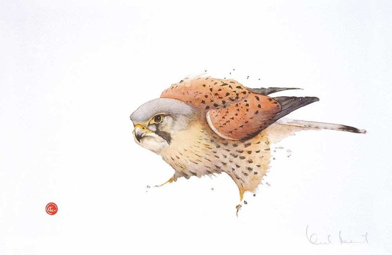 Image of KARL MARTENS - 'KESTREL' - LITHOGRAPH - SIGNED & STAMPED