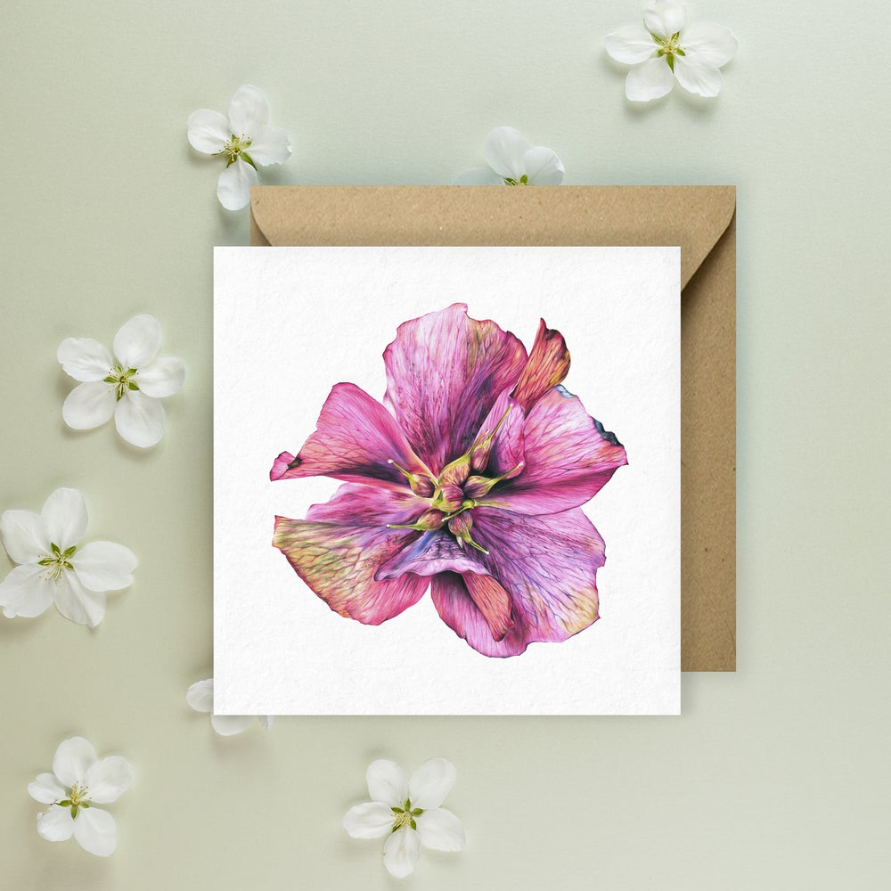 Image of 'Hellebore' Greeting Card