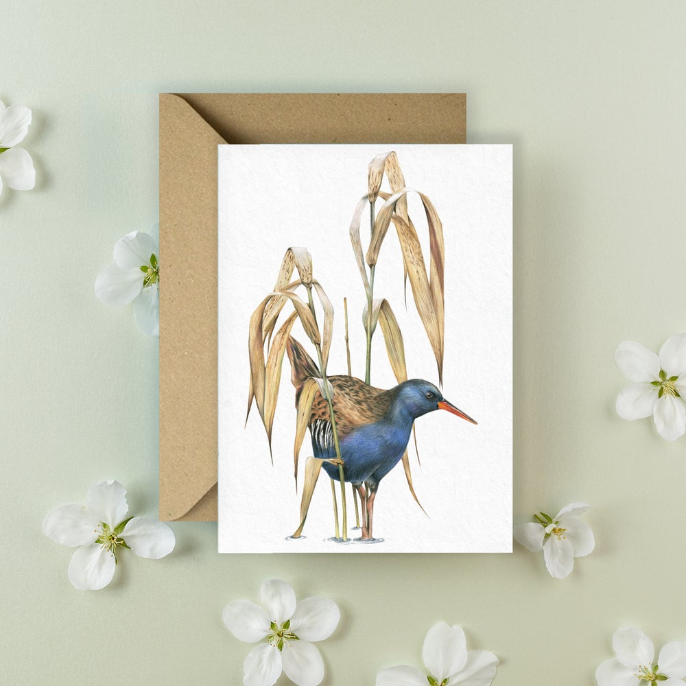 Image of 'Water Rail' Greeting Card
