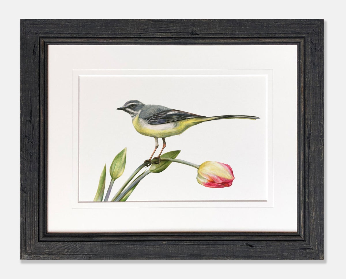 Image of 'Grey Wagtail' Limited Edition Print