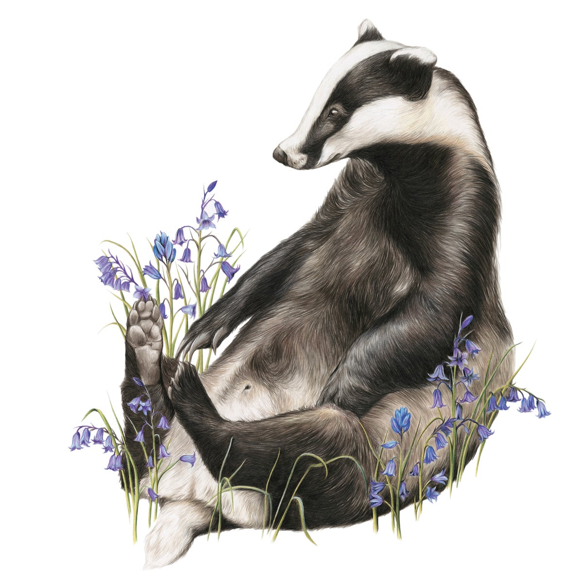 Image of 'Bella Bluebell' Limited Edition Print