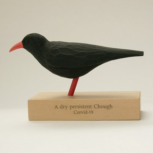 Image of A dry persistent Chough. Corvid - 19