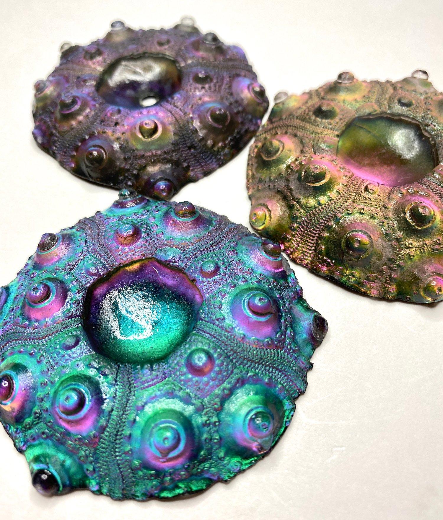 Monochrome Urchins~ 55-60mm, 3 Choices
