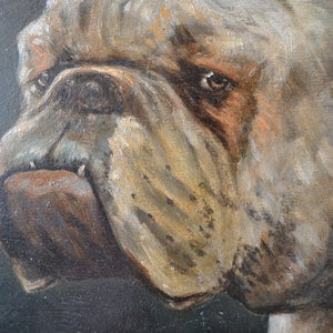 Image of 1936 Oil painting of a Bulldog