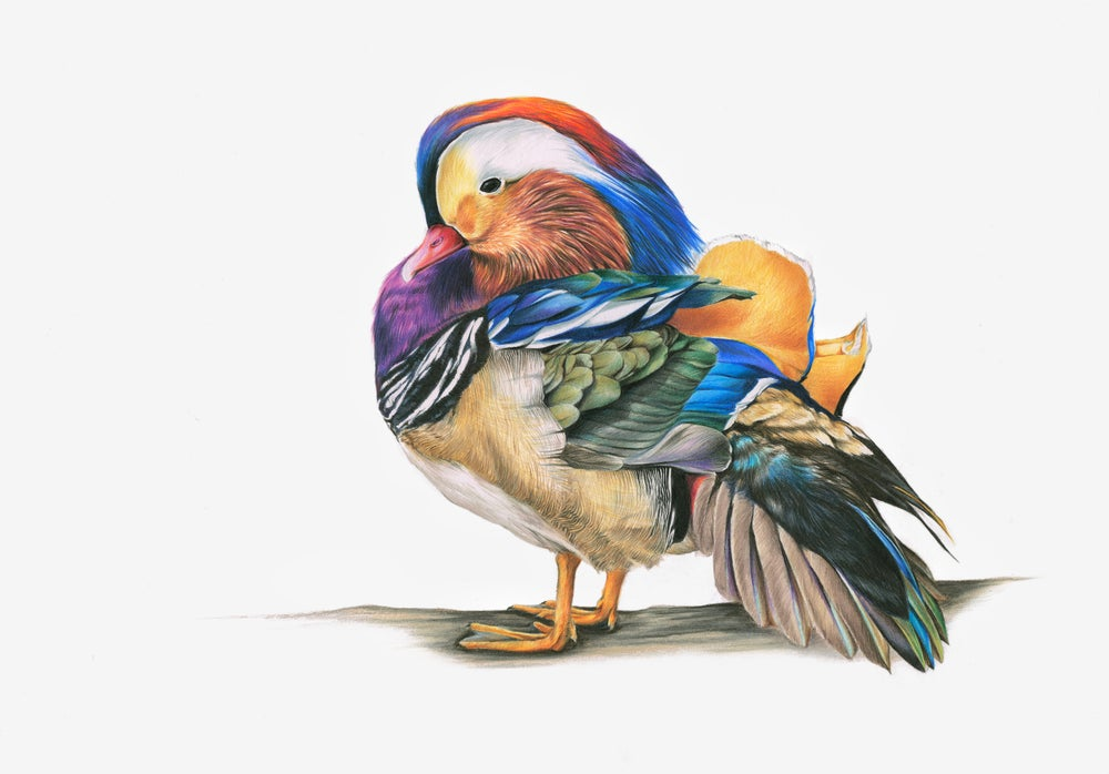 Image of 'Mandarin Duck' Limited Edition Print