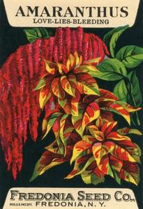 Image of Amaranthus