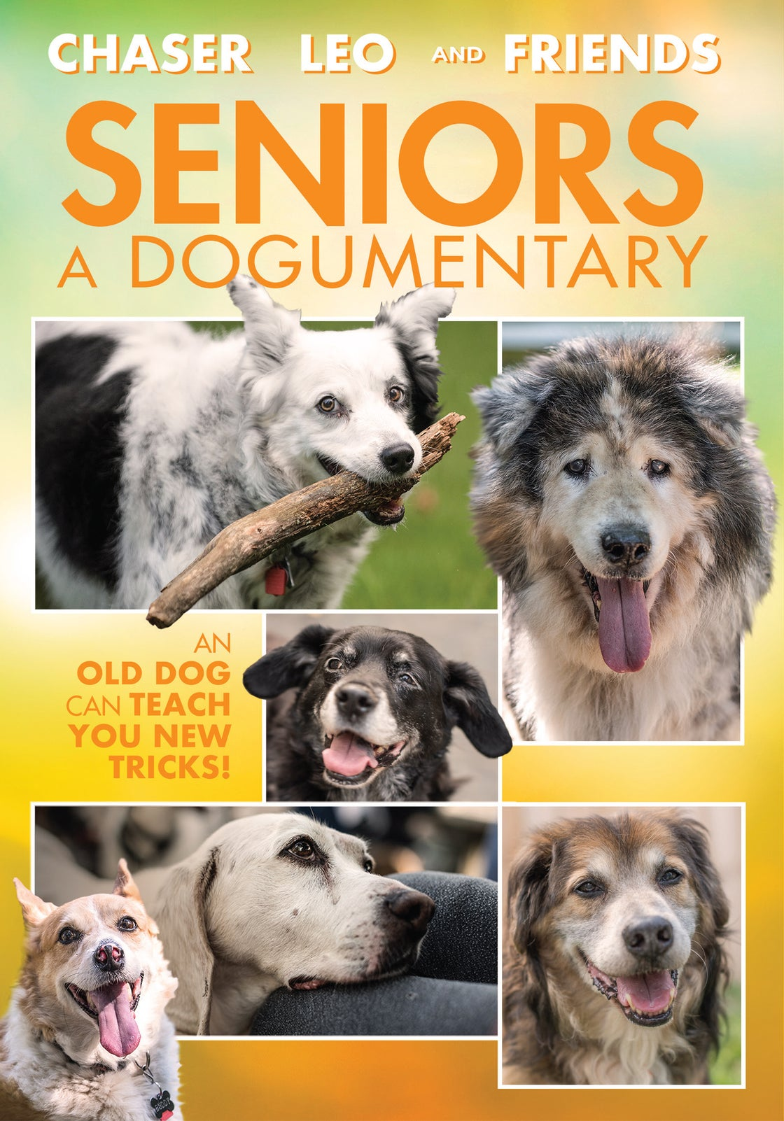 Image of Seniors A Dogumentary deluxe DVD & BluRay