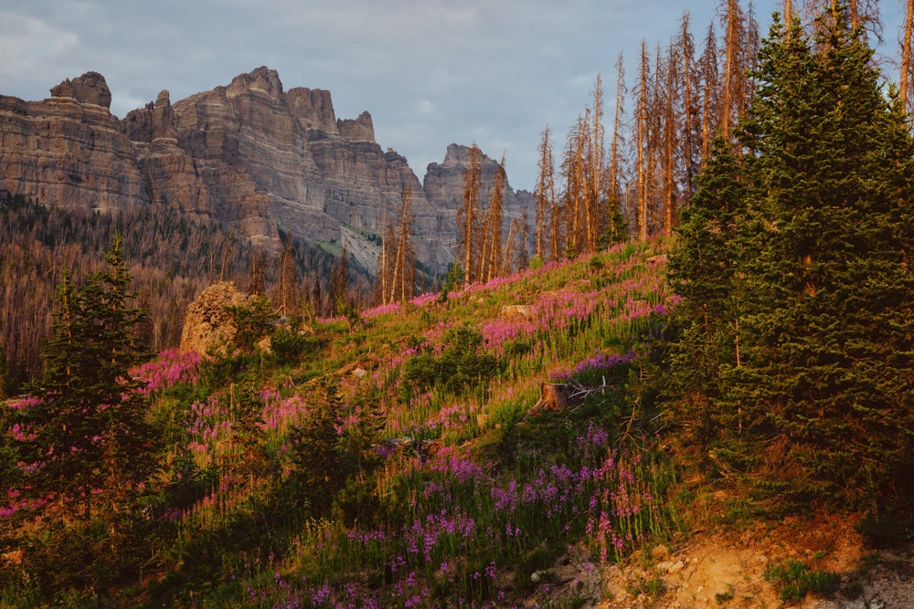 Pink Flowers Against Mountains