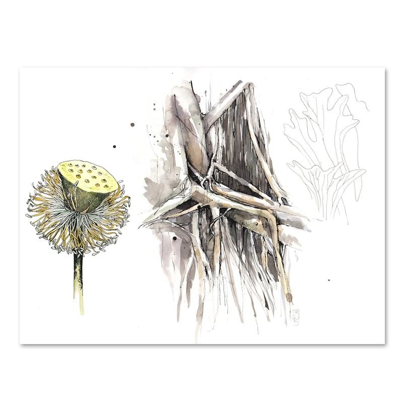 """Image of Original Painting - """"Etude de végétaux - Lotus, Banian, Fougère corne de cerf"""" - 30x40 cm"""