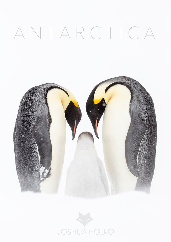 Image of Antarctica Emperor Penguin Family Poster