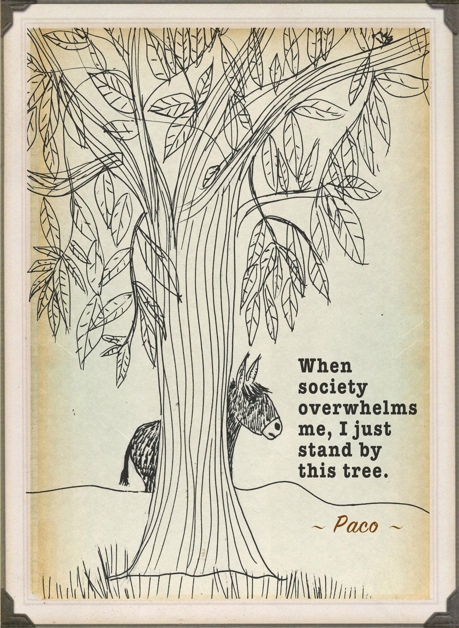 Image of Paco's Tree
