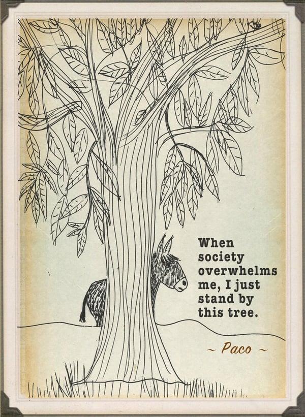 Image of Paco's Tree