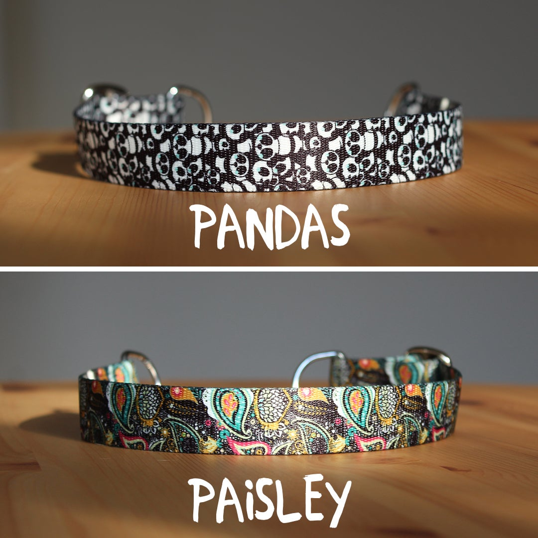 Image of 1 inch martingale dog collar
