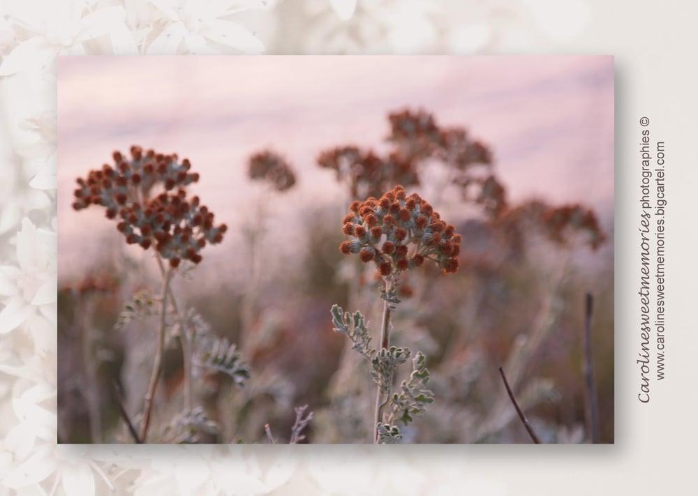 Image of Végétation corse au soleil couchant | TIRAGE PHOTO