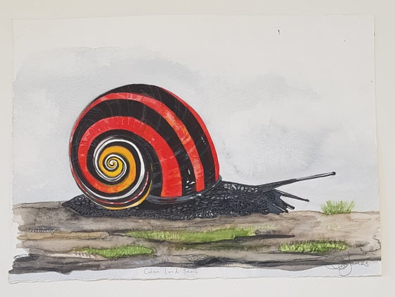 Image of Cuban Land Snail in Red