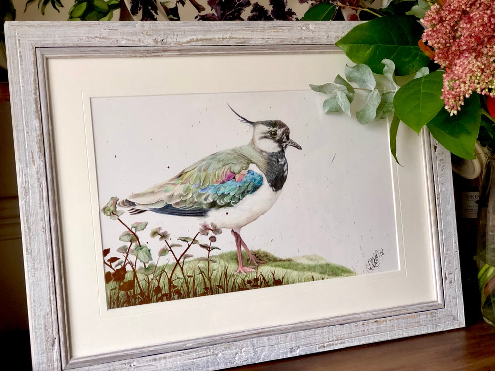 Image of Lapwing - Original