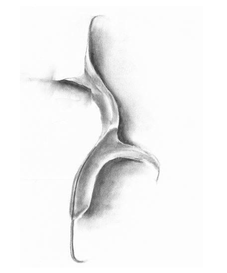 Image of Dancing Leaf #1