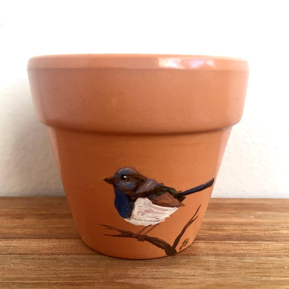 Superb Fairywren Pot