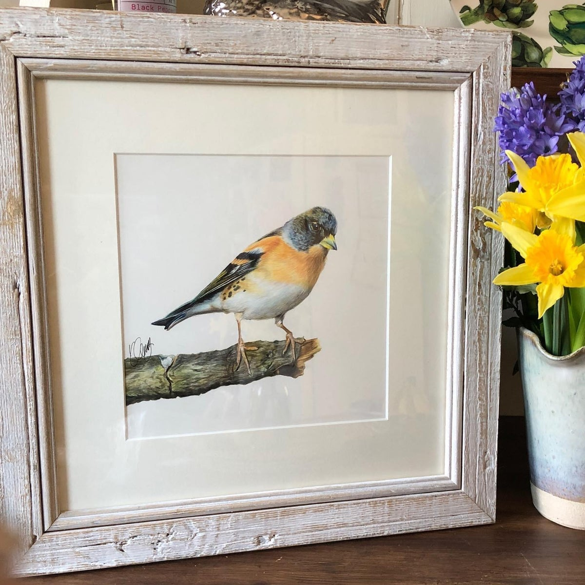 Image of 'Brambling' Original