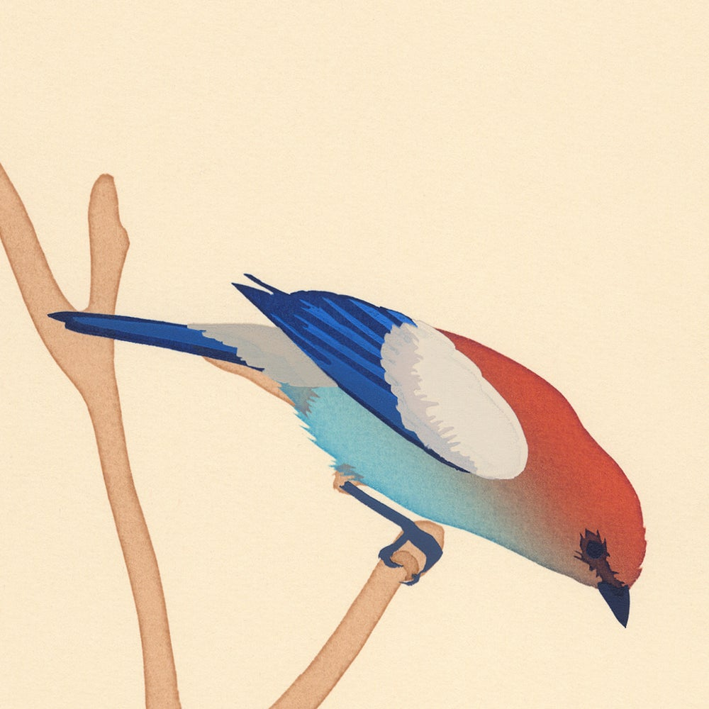 Image of Chestnut-Headed Tanager Screen Print