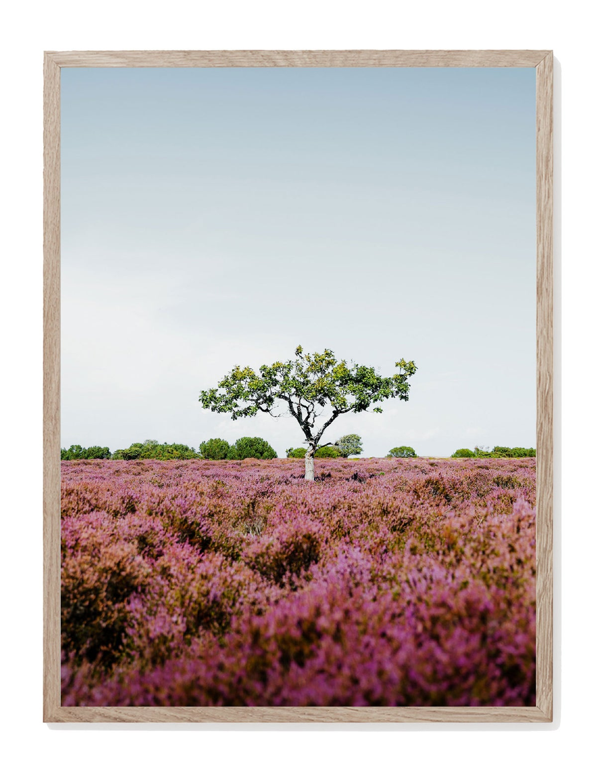 Image of Heather Tree Print