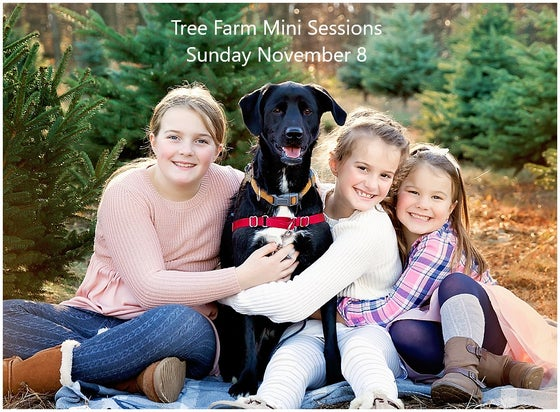 Image of SUNDAY Nov 8 - Tree Farm Holiday Sessions