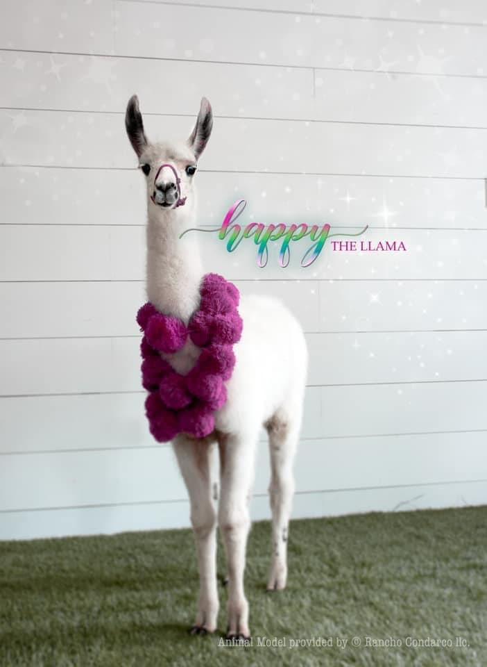 Image of FA LA LA LA LLAMA Mini Sessions