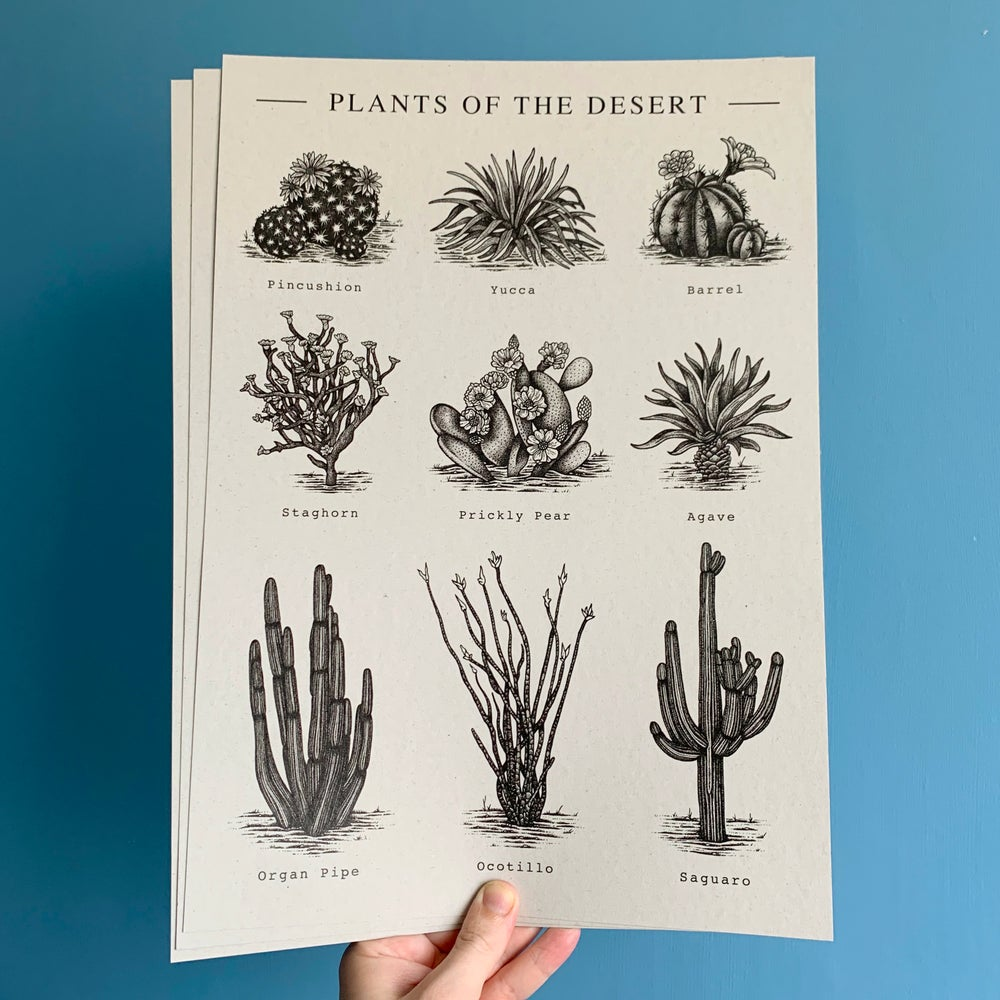 Image of Plants Of The Desert