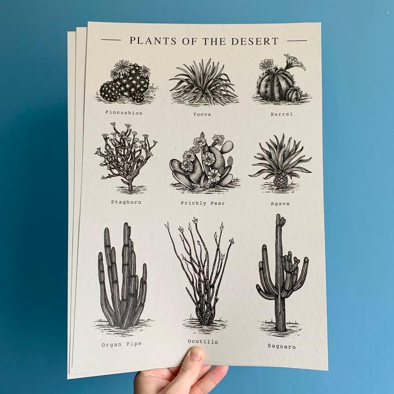Image of Plants Of The Desert