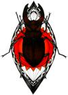 Beetle Pair