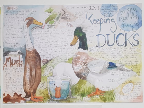 Image of Keeping Ducks poster.
