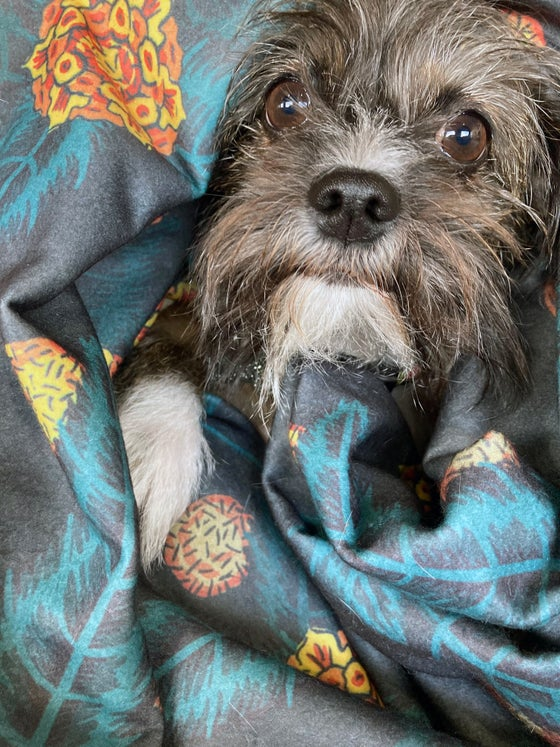 Image of Jungle Boogie Pet Blanket