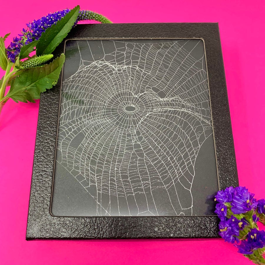 Image of REAL Preserved Spider Web