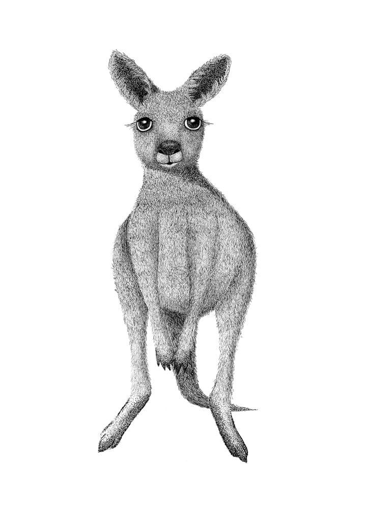 Image of Little Joey