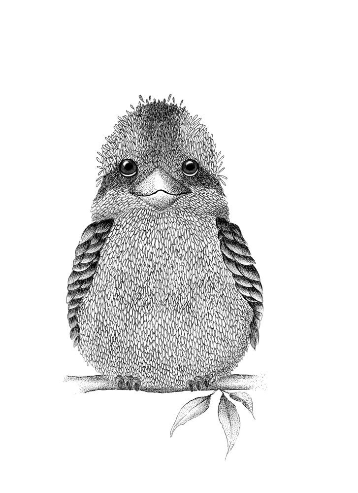 Image of Kookaburra