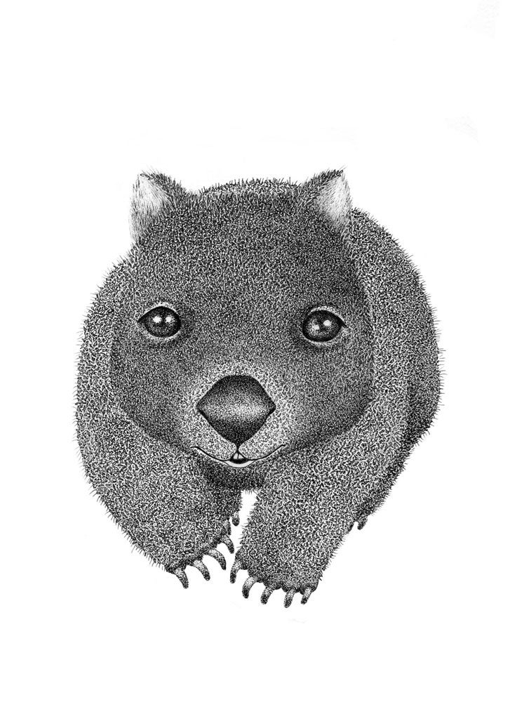 Image of Wombat