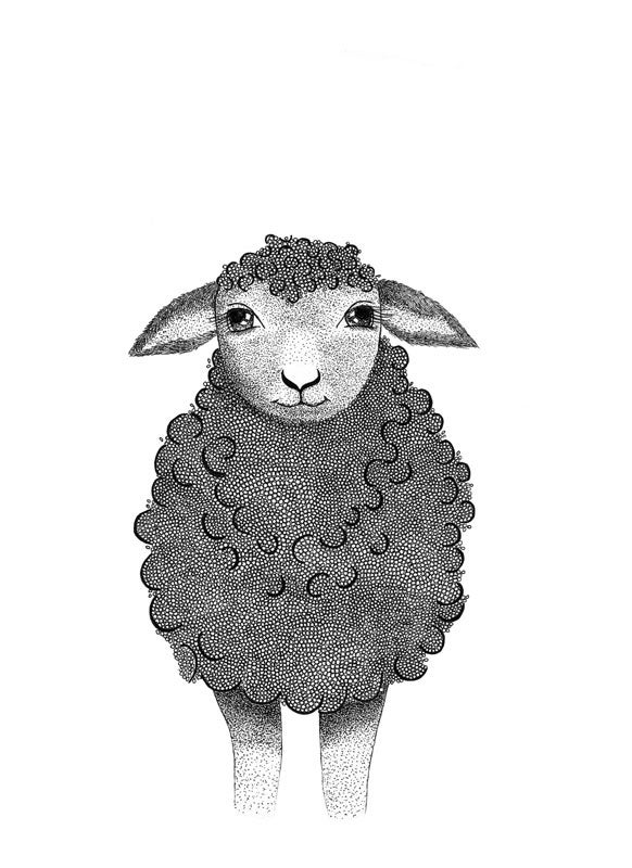 Image of Sheep