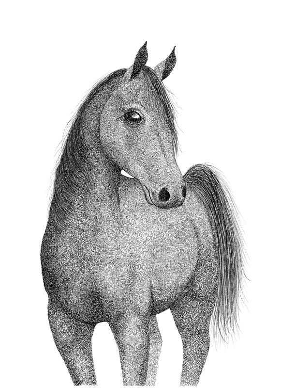 Image of Arabian Horse