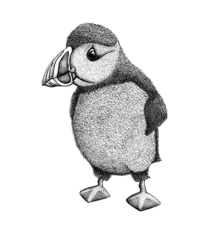 Image of Atlantic Puffin