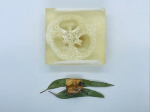Picture Jasper Soap with Loofah